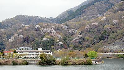 丹沢湖畔が花爛漫