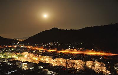 幻想的な月と夜桜