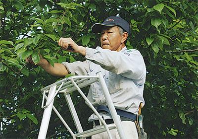 庭木の剪定や消毒はお任せ