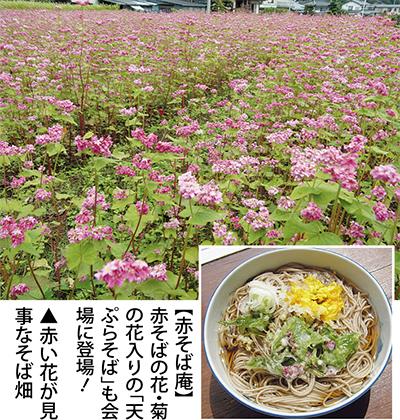 矢倉沢で「赤そば祭り」