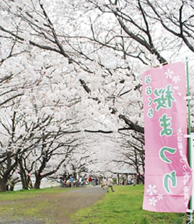 大口広場で桜まつり