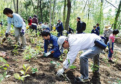 原植生の森 再生へ