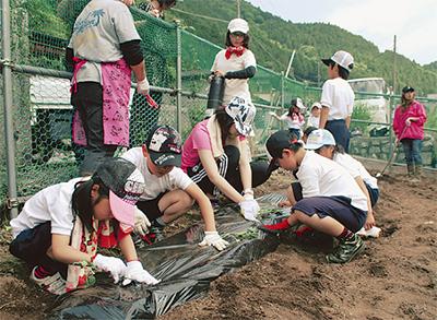 遊休農地で芋植え
