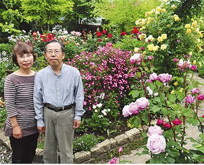 色鮮やか バラ100種