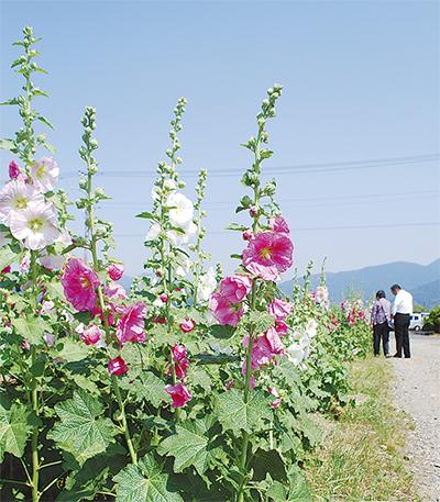 田園の初夏、咲く