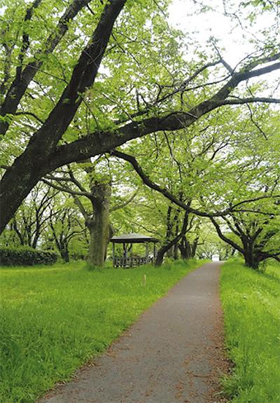 田中丘隅(きゅうぐ)の文命堤を訪ねて