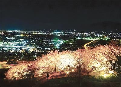 夜桜と夜景