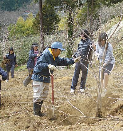 中学生がロウバイ植樹