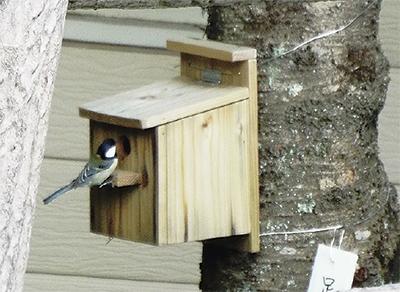 シジュウカラ 巣箱