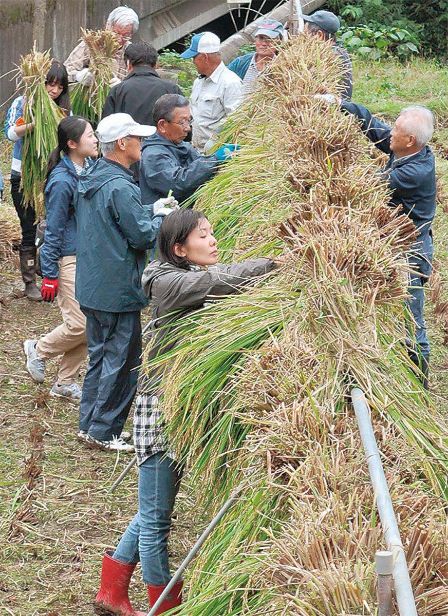 酒米の棚田で農業体験