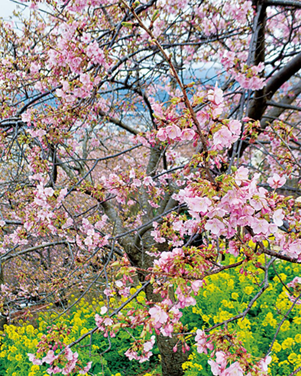 いち早い春 祭典スタート
