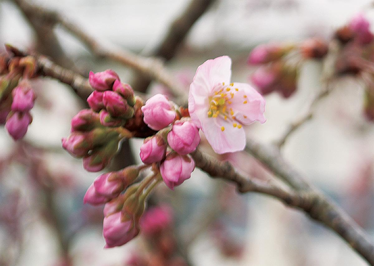 春めきほころぶ