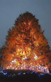 6千個の光をまとうヒマラヤスギ