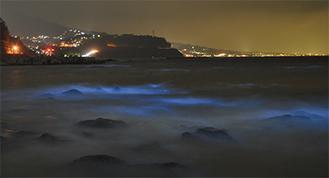 波が割れた衝撃で発光する赤潮 水底から照らすよう(3月29日19時)