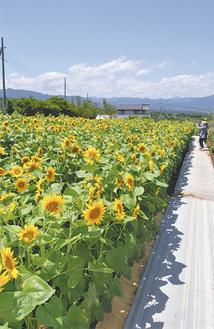 カーナビは「神奈川県南足柄市塚原3009(ユートピア農園)」で検索を