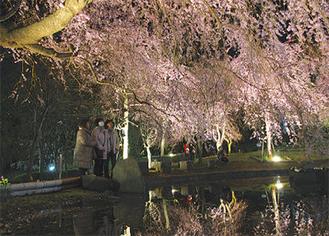 池が鏡のように桜を映す