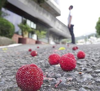 路上に散らばる実 柑きつ類に似た味