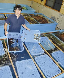 稚貝の手入れを担当する青木博和さん