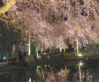 水面に映る桜が美しい