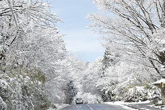 雪の重みで枝がしなっていた甘酒茶屋付近