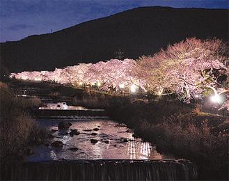 花を透かした光が川面も照らす=14日夜