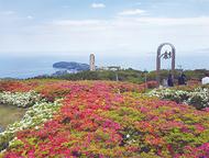 真鶴半島と花園競演