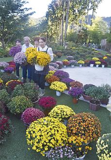 ガーデンを彩る菊の園路