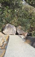 元旦の名所、岩ごろり