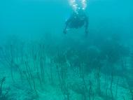 海の種まき 新芽生えた