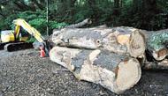 拡大防ぐため伐採