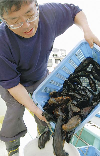 韓国にも輸出される「湯河原産」