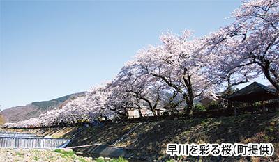 知られざる桜並木の