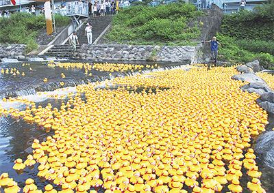 6000羽が集結狩川ダックレース