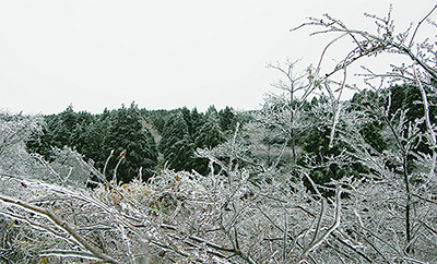 凍った箱根