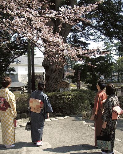 桜の季節を着物で