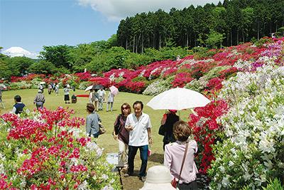 極彩色の庭園