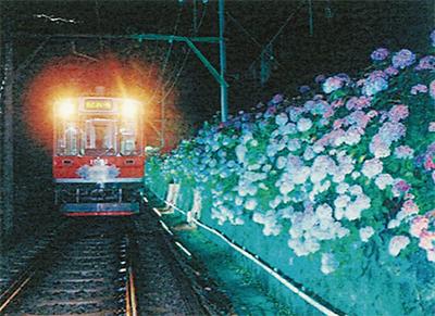 あじさい列車、復活