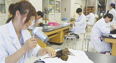 学生や主婦、初めての剥製作り