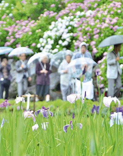 小田原城を彩る花々