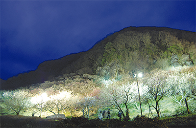 梅の宴、9日まで夜間照明