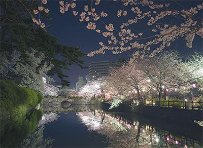 天守閣から夜桜見物