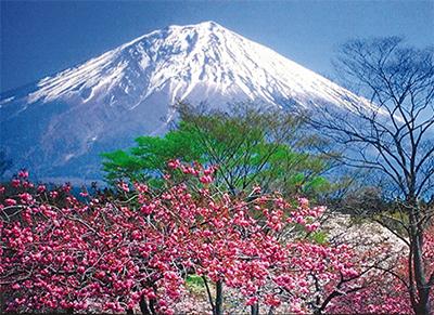 富士山主役の30枚
