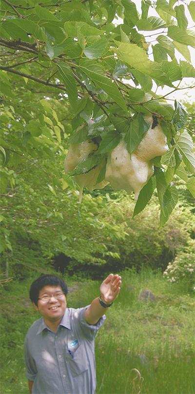 元箱根で産卵ピーク