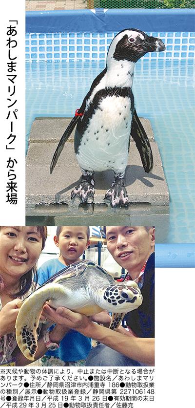 ラスカにペンギン&ウミガメ