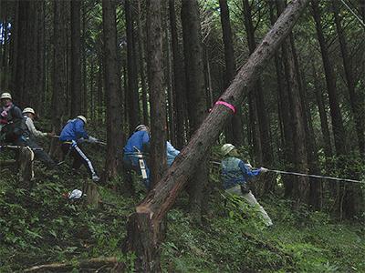 木を相手に綱引き