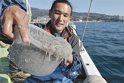 春のシラス漁復活