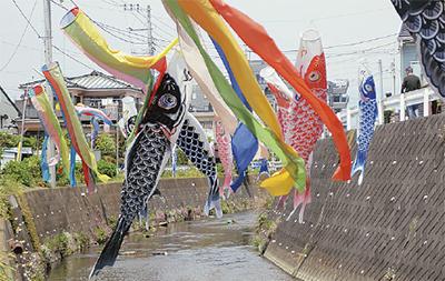 下菊川に鯉のぼり