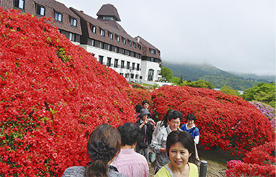 名物ツツジ開花赤色に包まれる