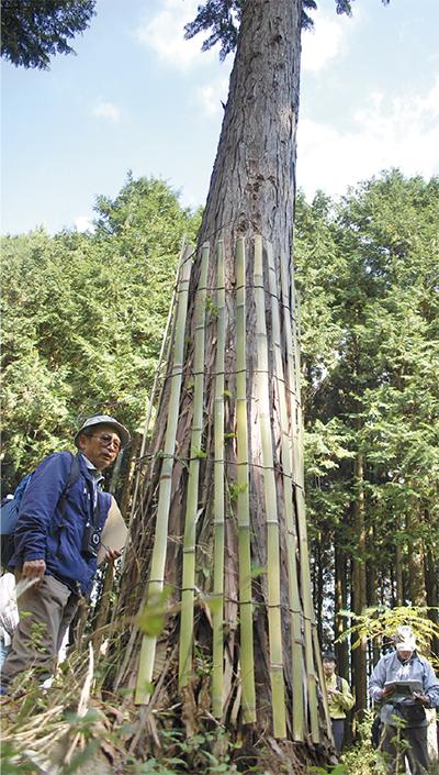箱根の森に鹿角ガード