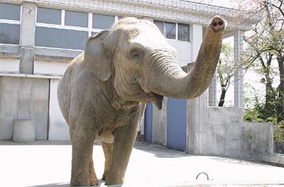 象のイズミ61歳で逝く